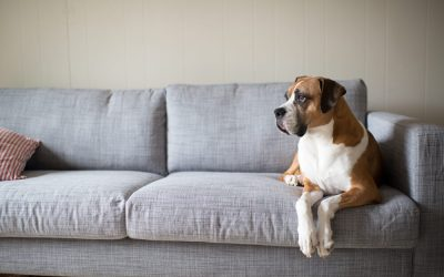 The Safest Cleaning Solution for Pets